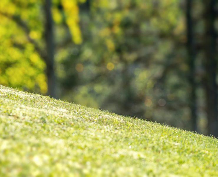sloped garden lawn