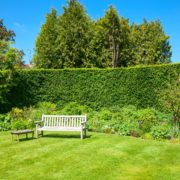 large garden hedge with lawn and wooden bench
