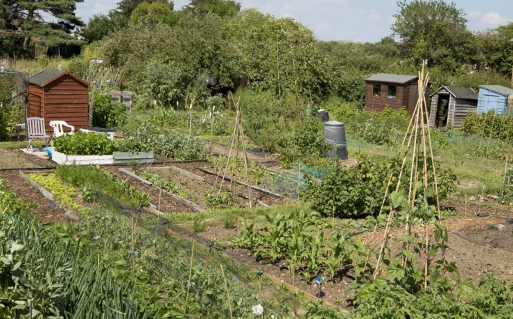an allotment in Britain
