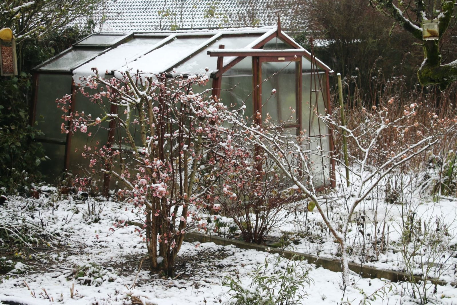 garden greenhouse covered in ice and snow during winter