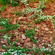 mulching on garden flowerbed