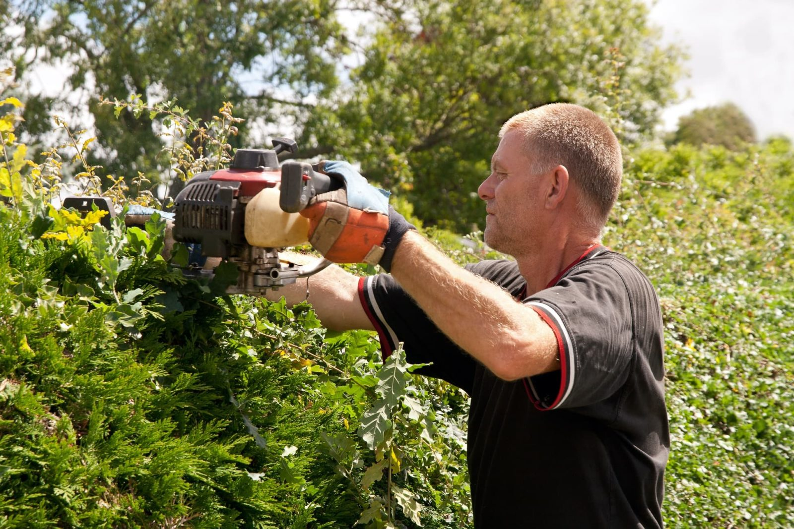 man trimming hedge with multi tool
