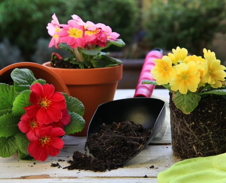 plant pots on a wooden potting bench