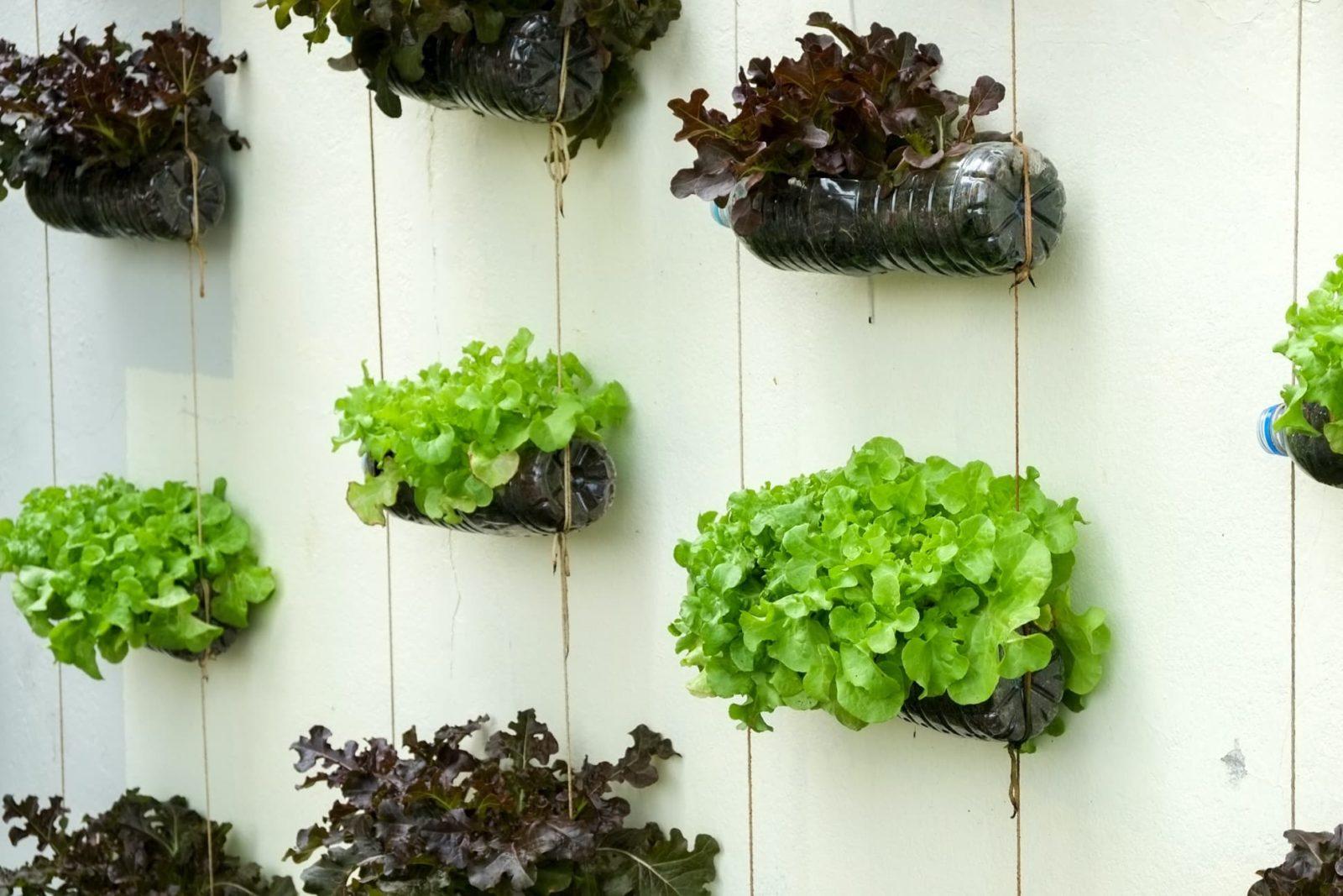 plants arranged on a wall