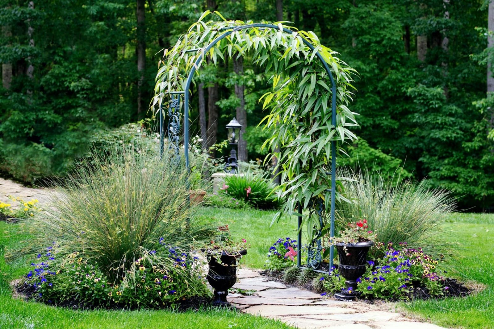 a garden arch covered in climbing plants