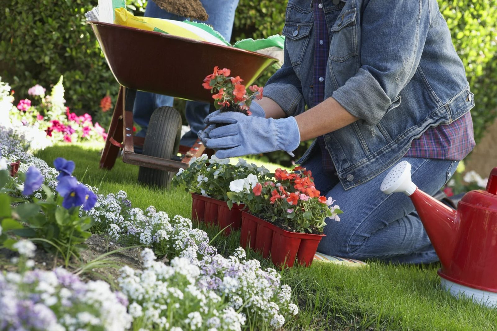 woman kneeling whilst planting in the garden