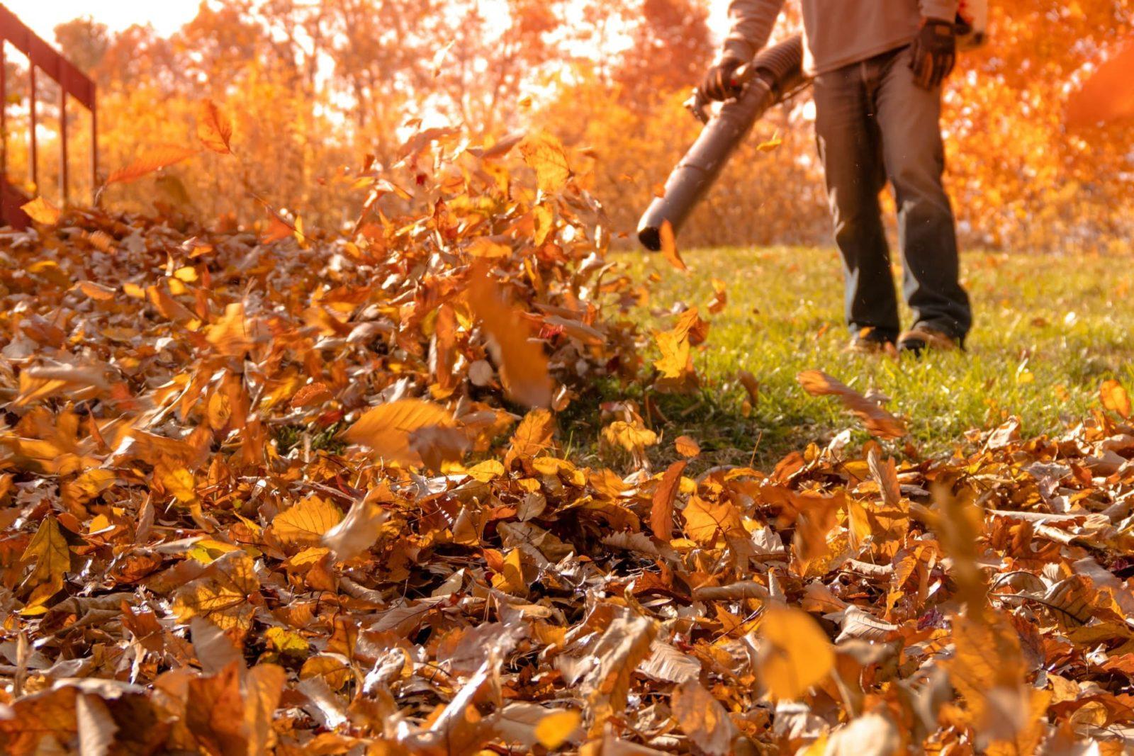 autumn leaves being blown around a garden