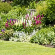 stunning border in english countryside garden