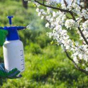 farmer spraying plant