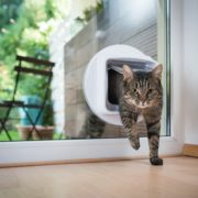 tabby cat entering the house through a cat flap