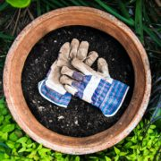 gardening gloves sat in a plant pot