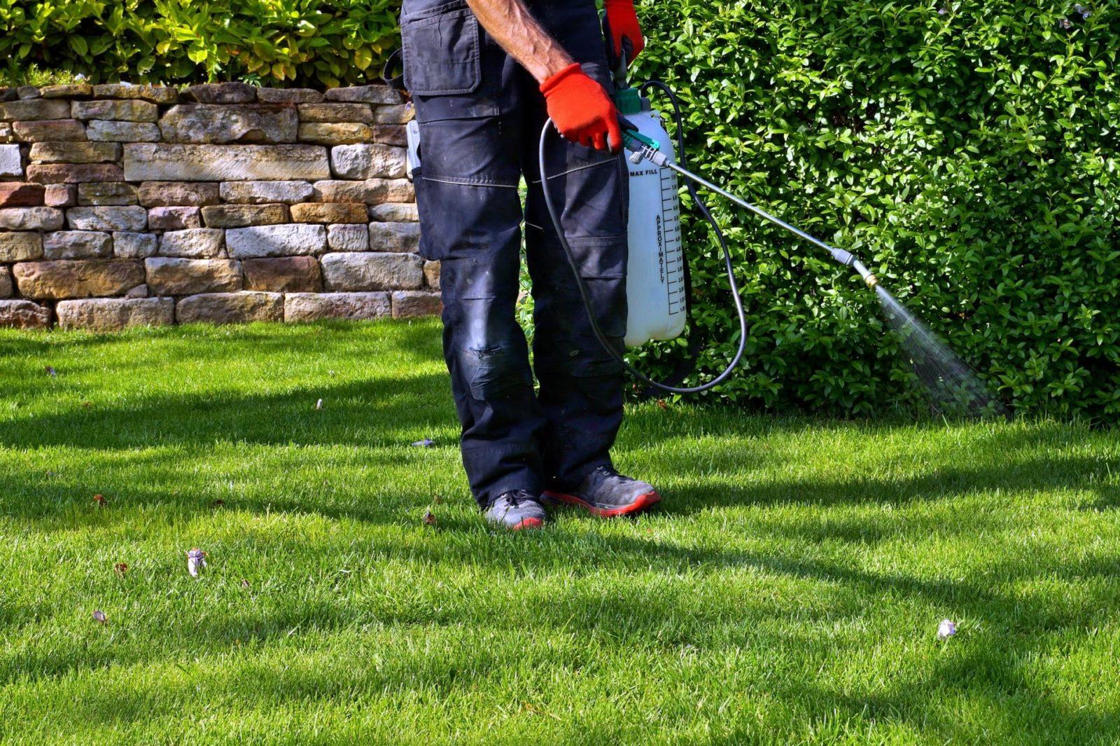 man spraying fertiliser on lawn