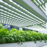 LED grow lights over plants growing