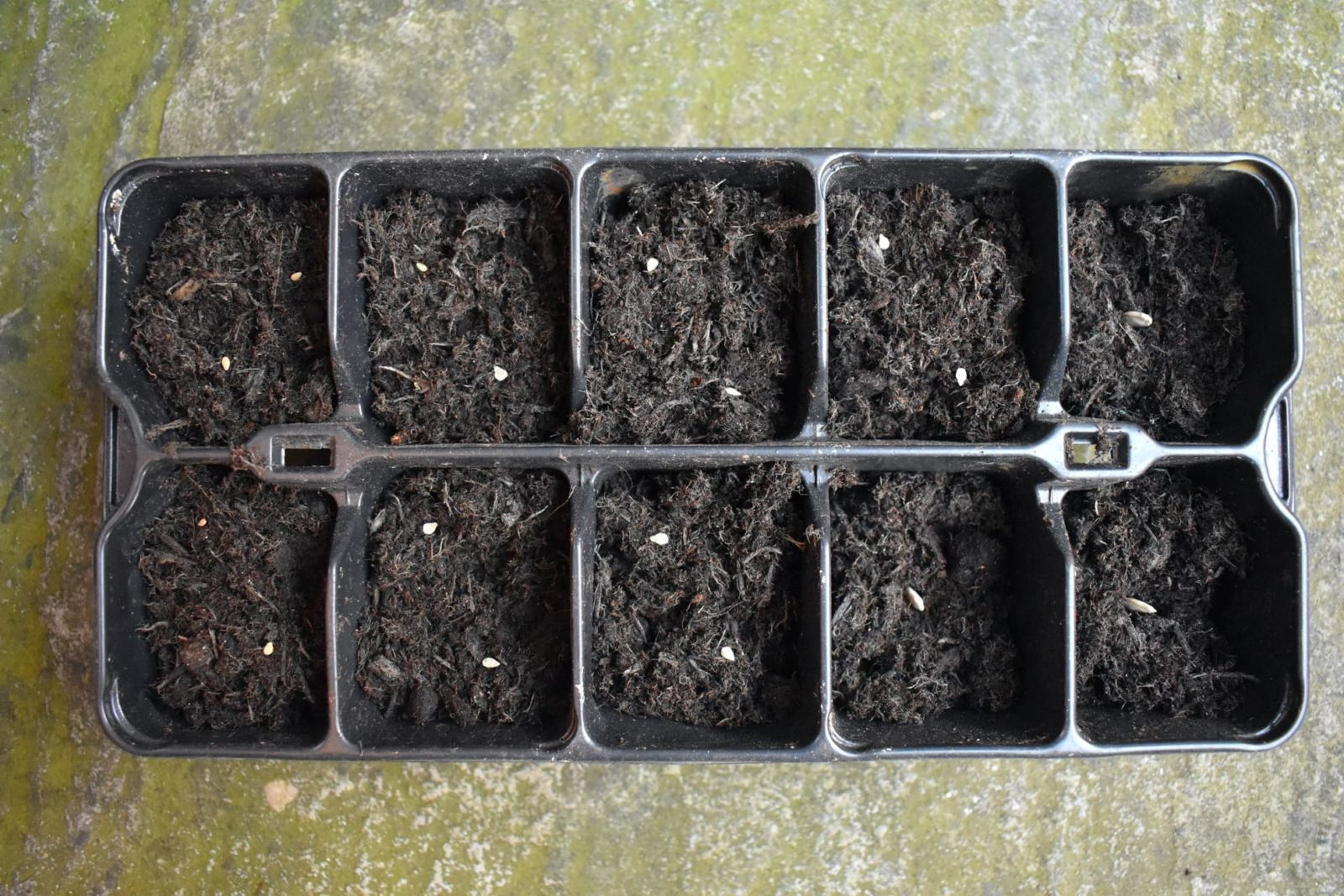 compost and seedlings in a tray