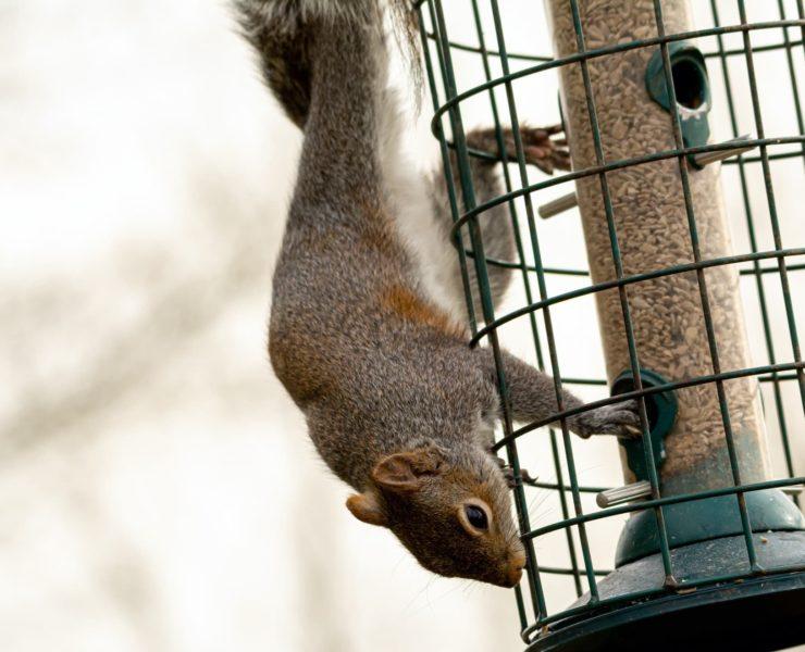 squirrel sat on a bird feeder