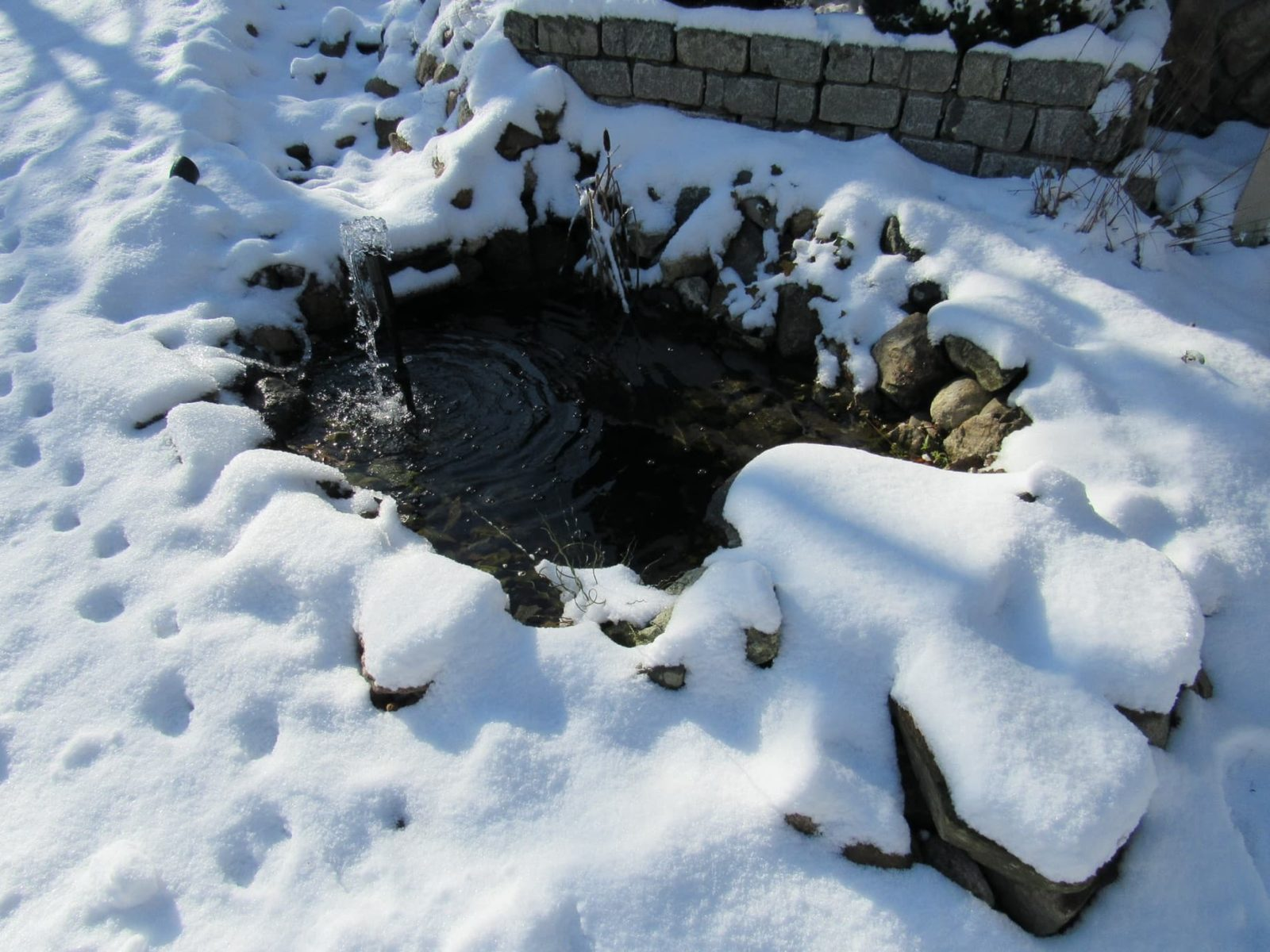 a garden pond surrounded by snow in winter