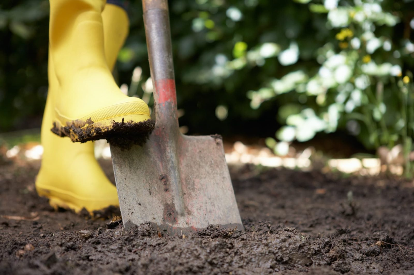 spade being dug into soil with yellow wellies