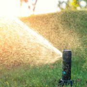lawn sprinkler in action