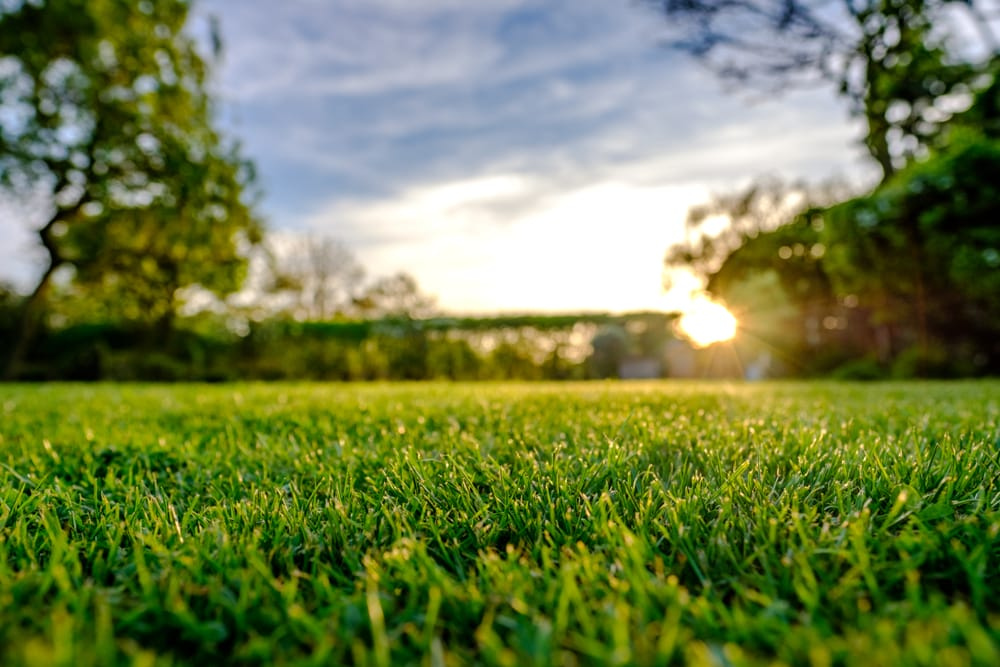 sunset view of a lawn with trees and hedging in the background