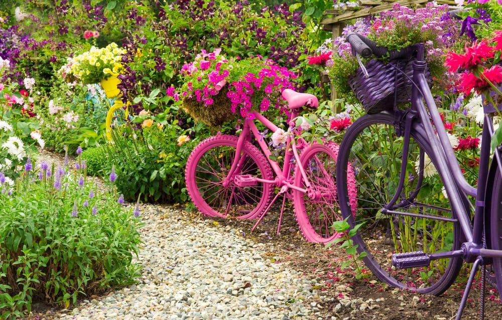 old bicycles painted pink and purple in a flourishing garden