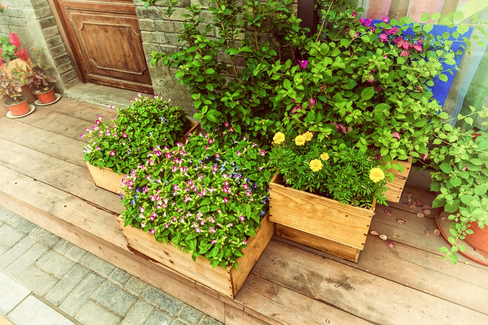 Flowers in wooden planters sat on decking