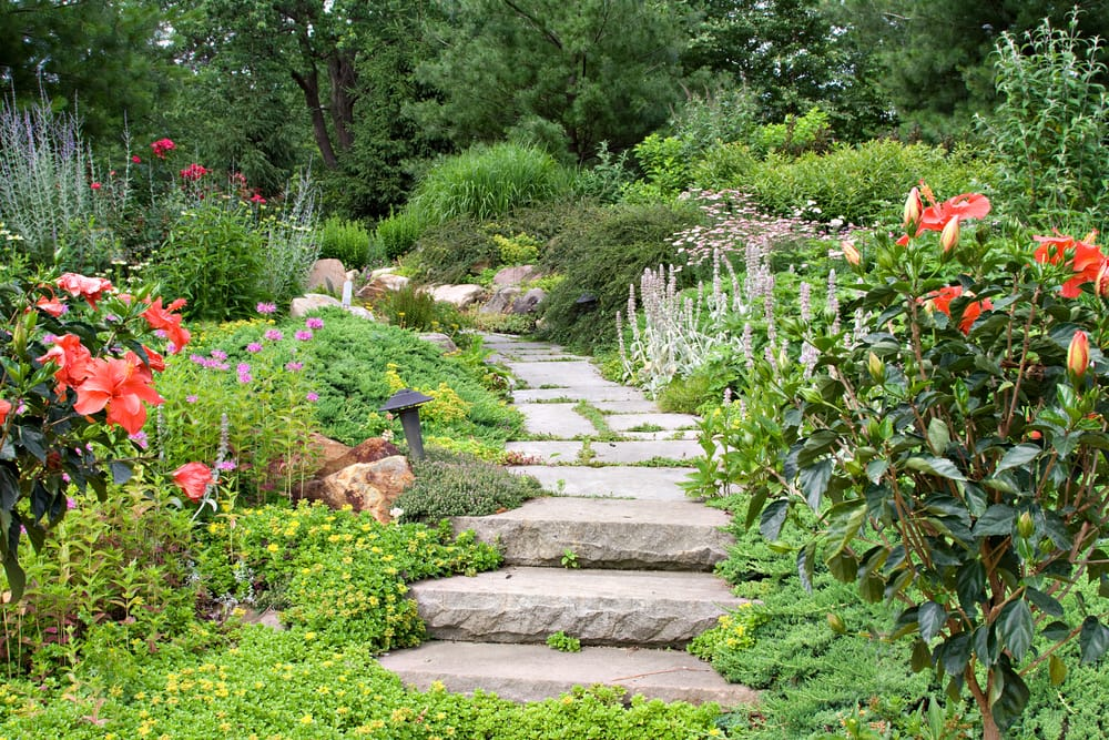 beautiful nature path through a lush green garden