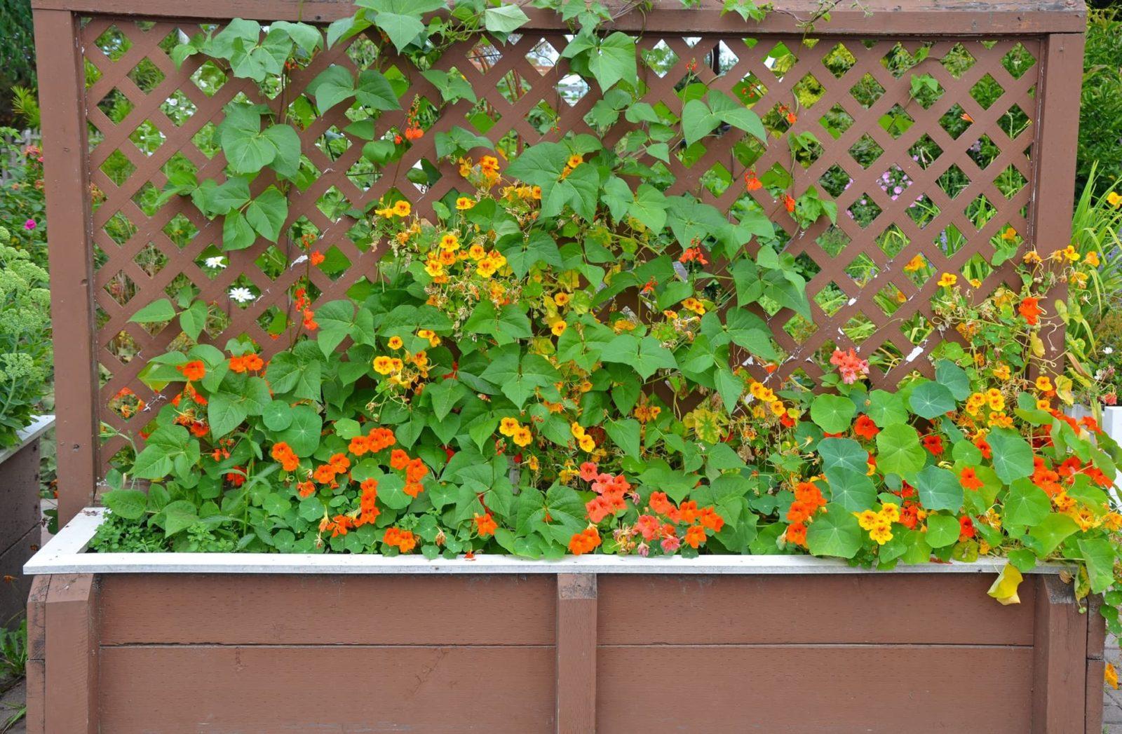 wooden trellis planter with yellow and orange plants