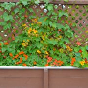 wooden trellis planter with yellow and orange plants