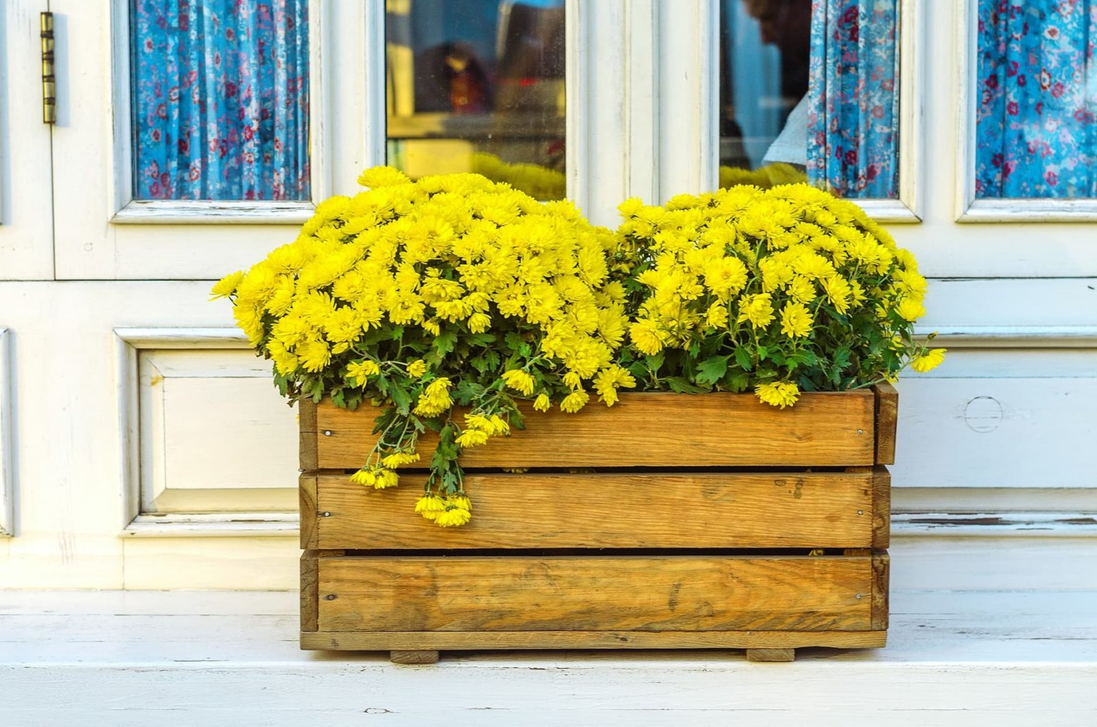 a timber planter with bright yellow flowers