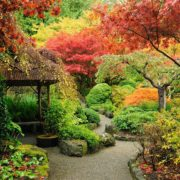 an autumnal japanese garden in Canada
