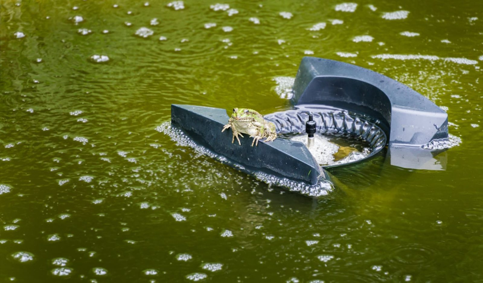 frog sat on a black pond aerator