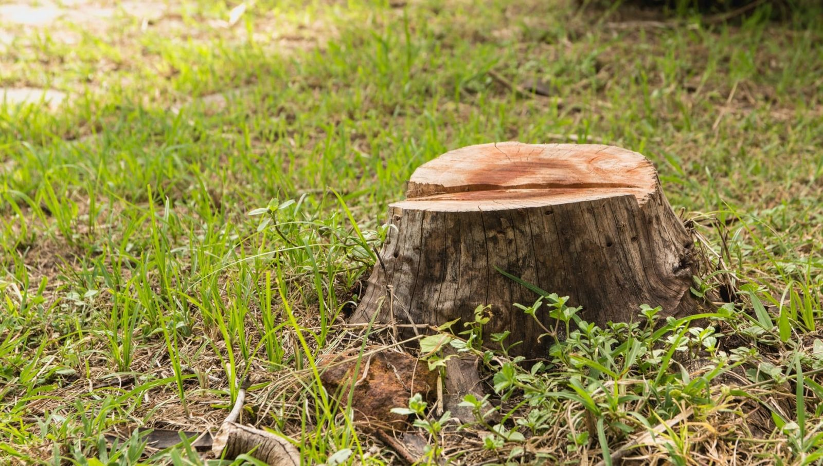 a tree stump with garden lawn in the background
