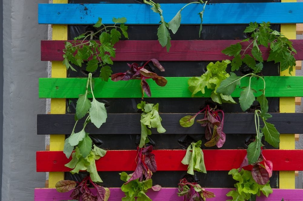 a colourful painted pallet hung vertically and used to grow plants