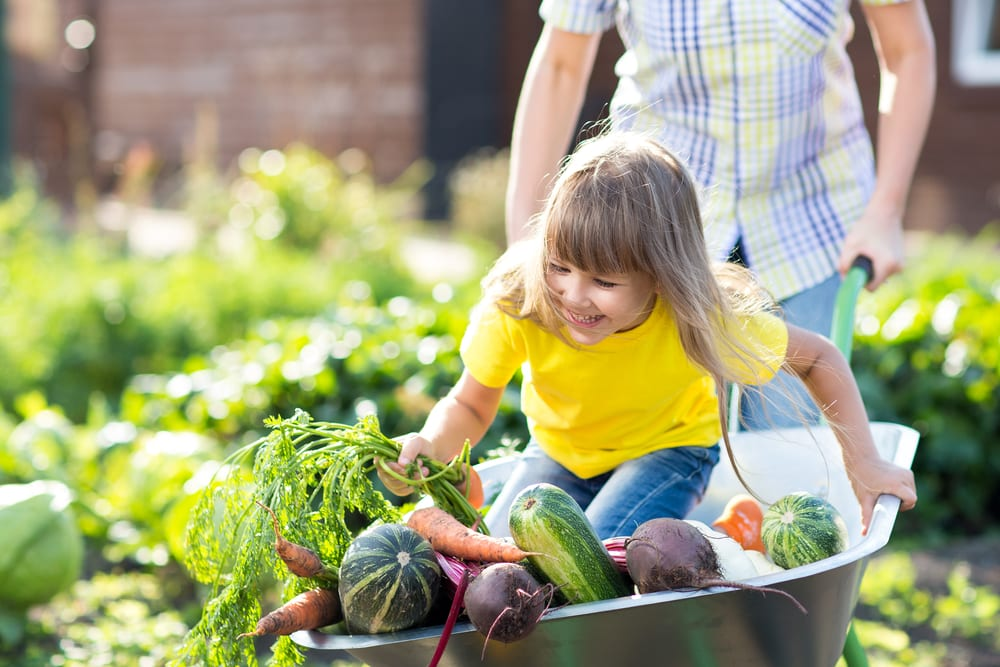 young girl and vegetables being pushed in a wheelbarrow
