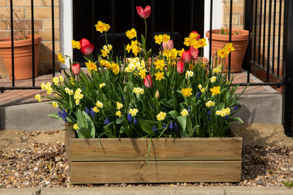 beautiful tulips and daffodils growing from a wooden planter