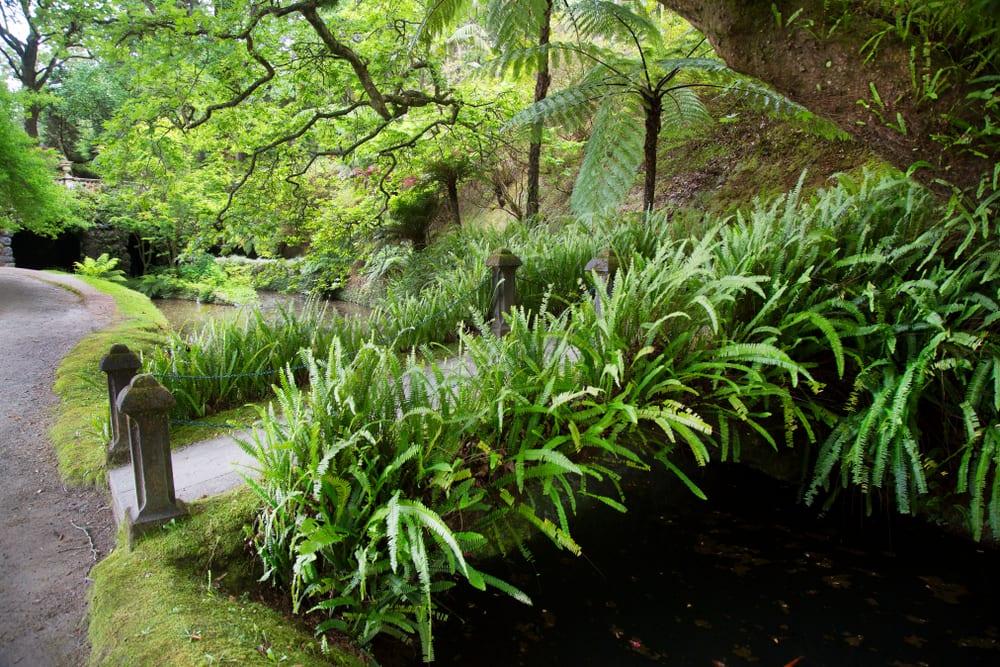 subtropical lush green ferns