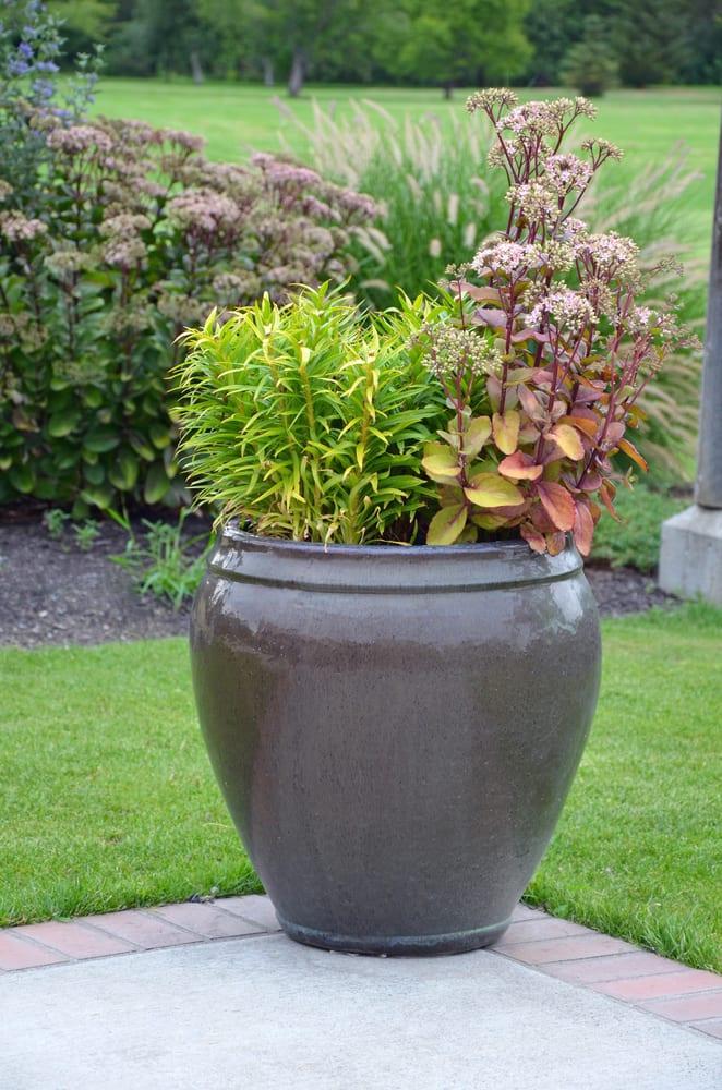 a ceramic planter on a garden patio