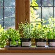 various herbs in plant pots on a window shelf