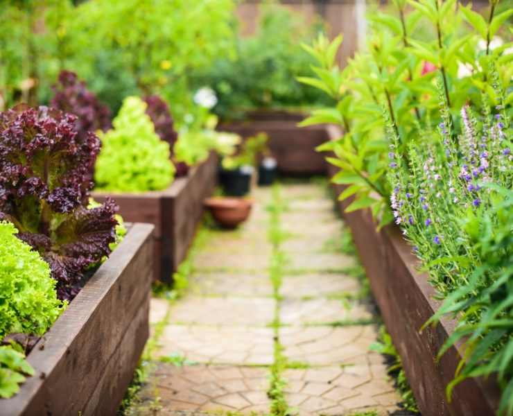 large vegetable garden with raised beds