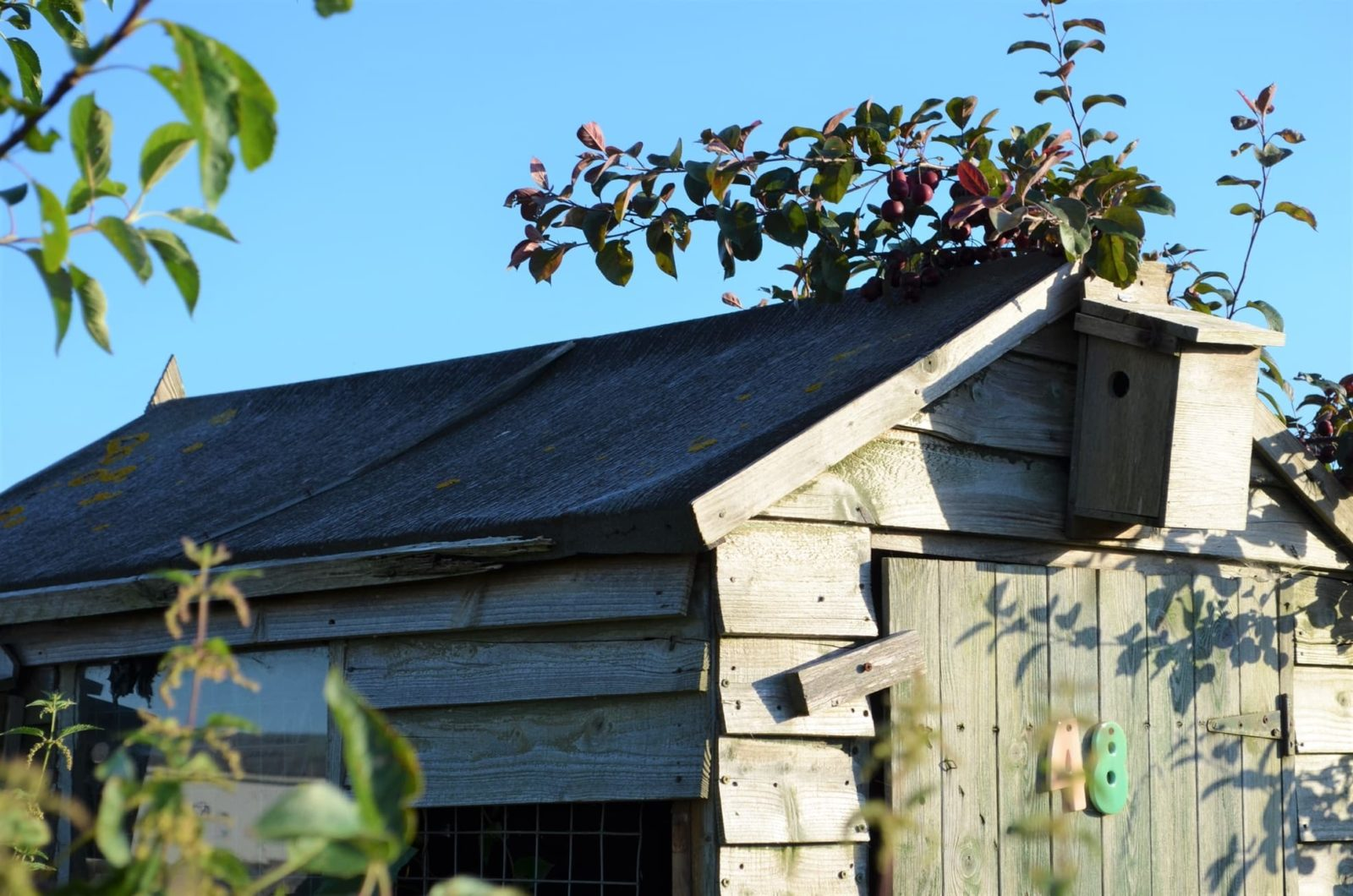 an old shed with a felt roof