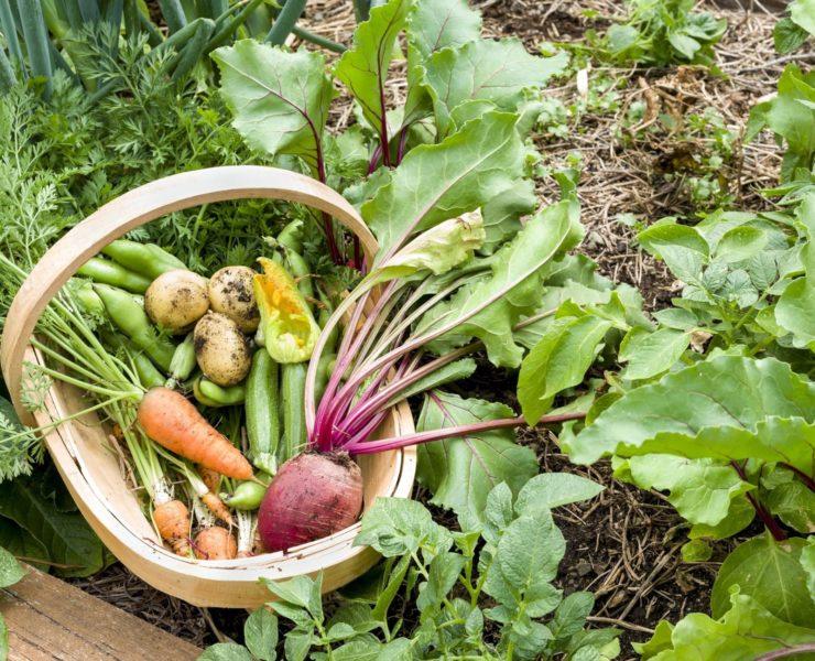 an assortment of vegetables sat in a trug basket