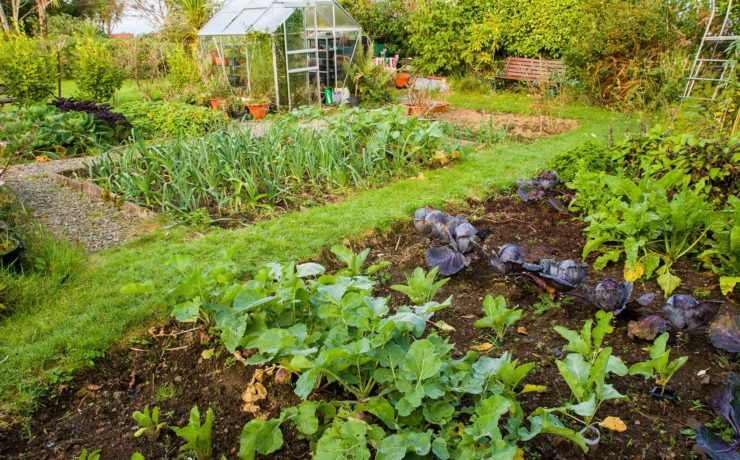 home garden vegetable patch