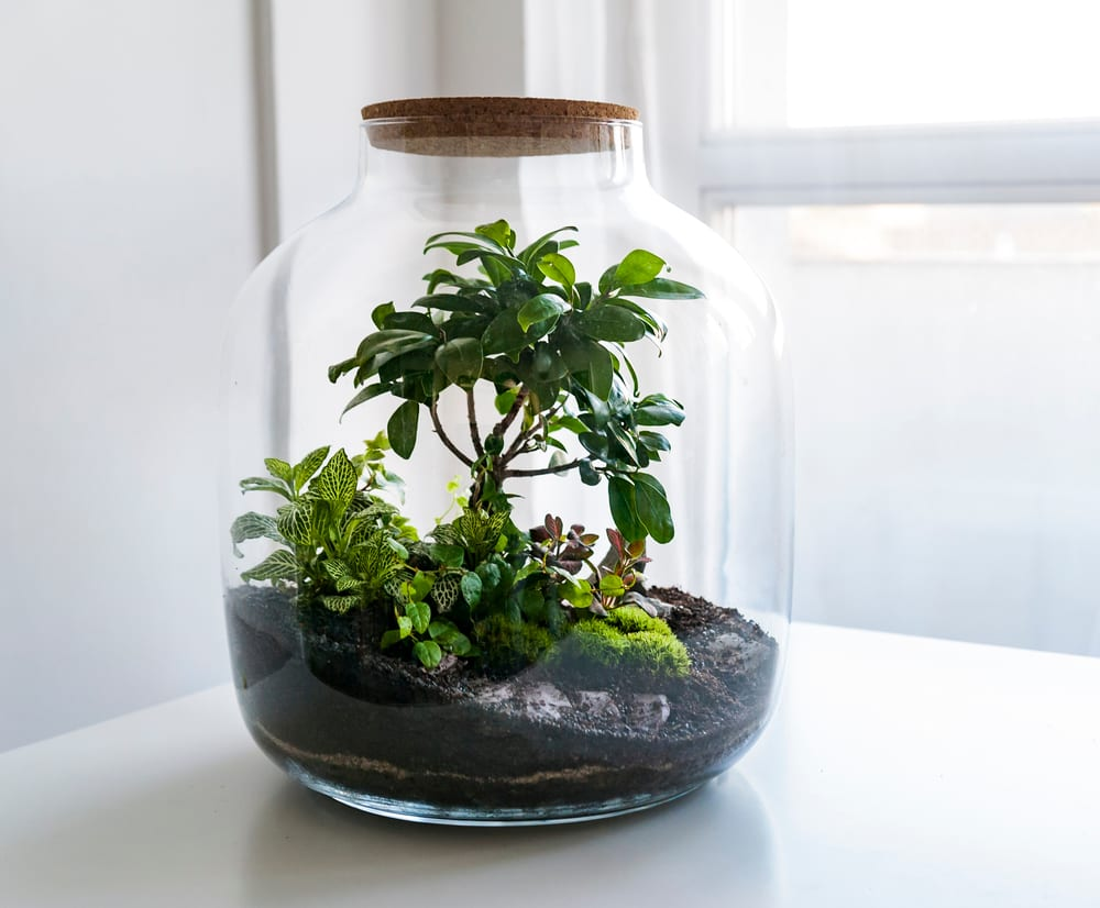 a terrarium jar with its own ecosystem