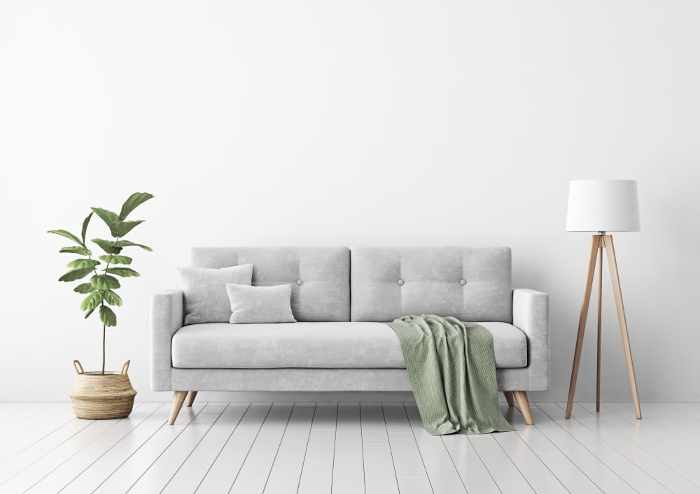 Living room interior with grey velvet sofa and fig leaf plant