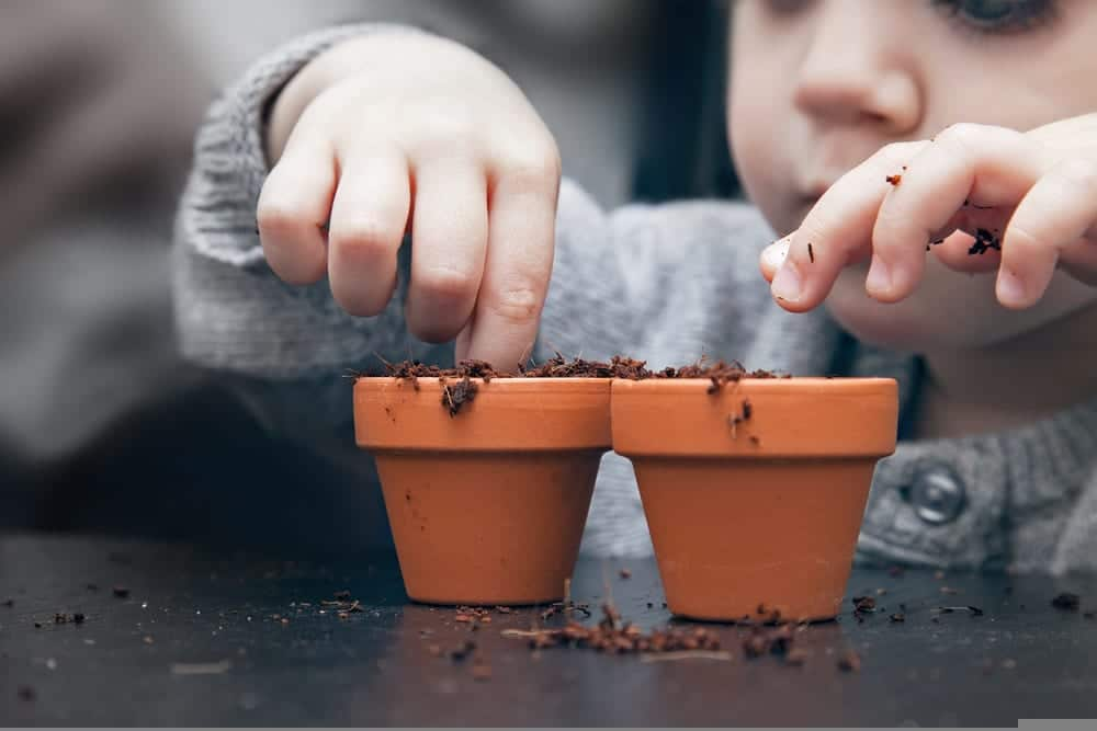 A child planting seeds in small terracotta pots