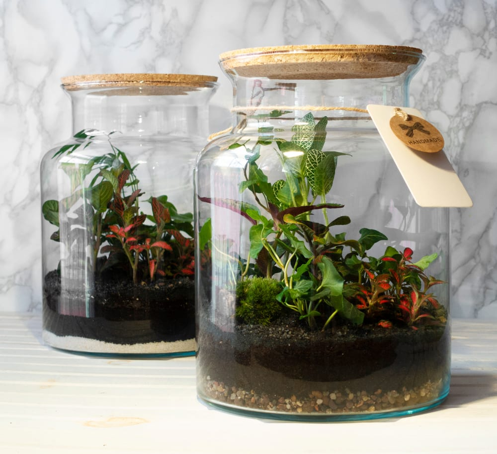 Two terrarium jars with plants inside