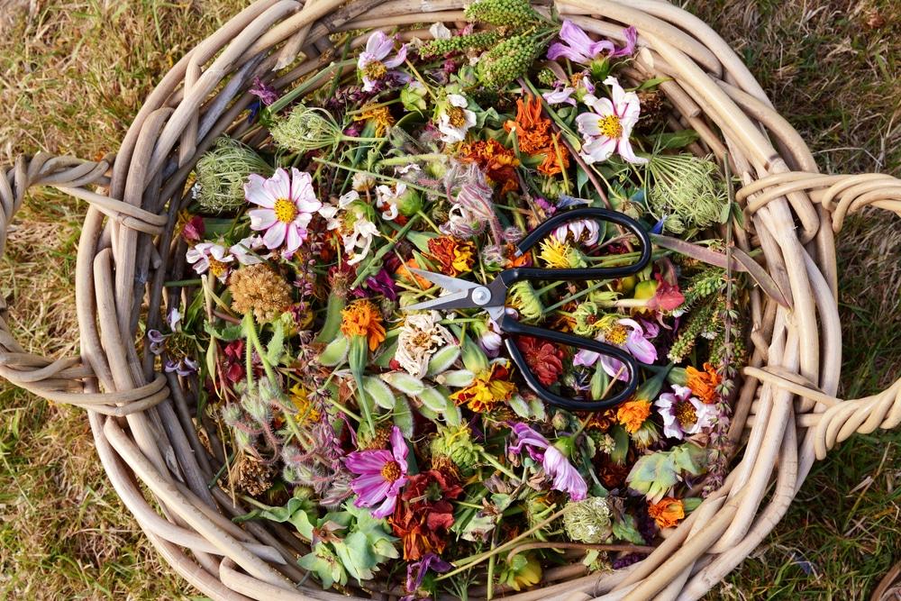 basket full of deadheaded flowers on a lawn