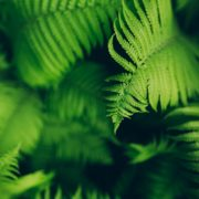 fern leaves on dark background