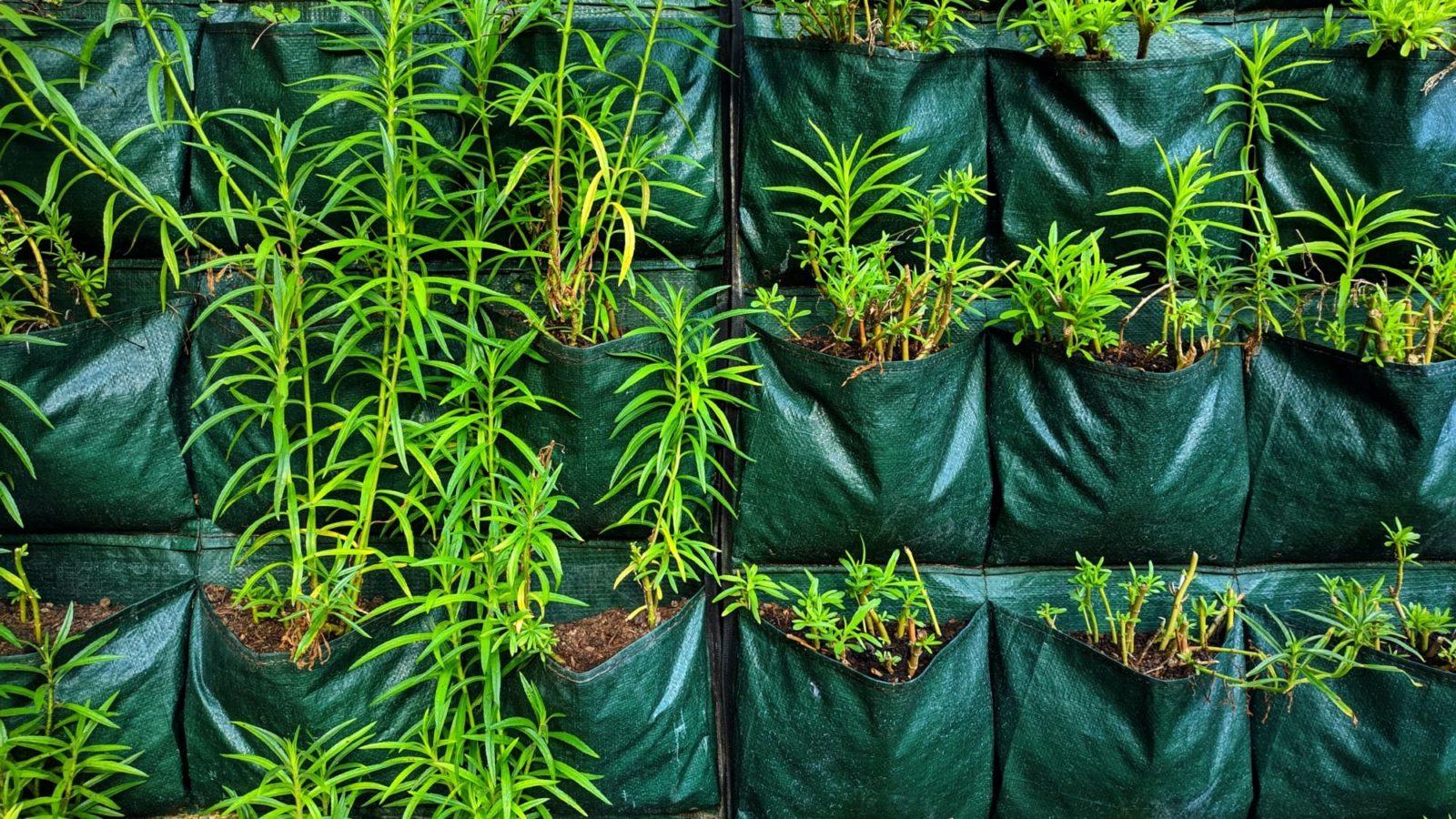 felt growing wall with greenery