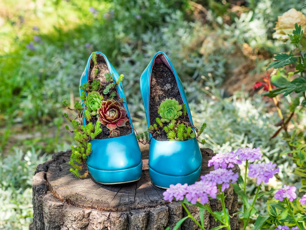 blue stilettos in the garden with succulents growing from them